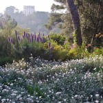 My 5 favorite gardens in France